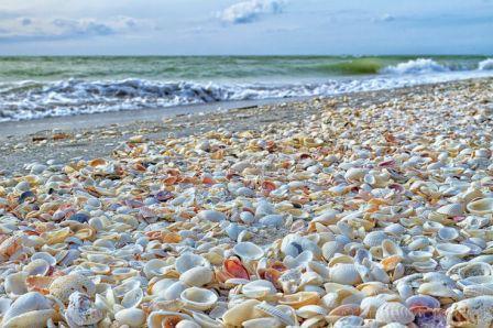 deniz-kabugu-sahili-florida